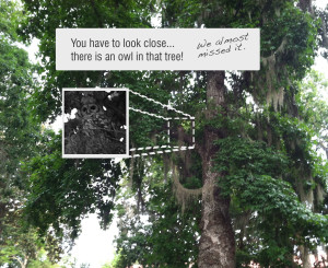 Wakulla-Springs-find-the-owl-w-insert